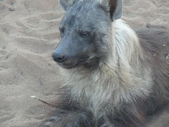 Harnas Wildlife Foundation: The adorable and beautiful Gumbi