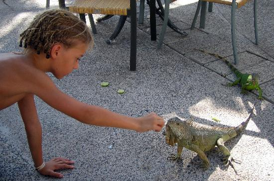 Sea Garden Mazatlan: HOW ABOUT PLAYING WITH THE IGUANAS