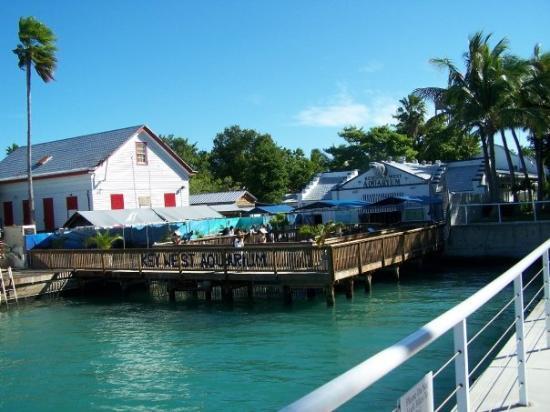 Key West Jaws Picture Of Key West Aquarium Key West Tripadvisor