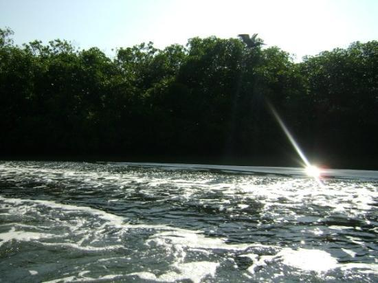 Tenacatita, Messico: Mangroves