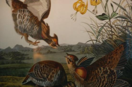 เชลเบิร์น, เวอร์มอนต์: Audubon print at the Electra Havemeyer Webb house at the Shelburne Museum
