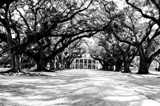 Oak Alley Plantation Interview With A Vampire oak alley plantation w...