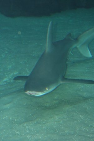 North Carolina Aquarium At Pine Knoll Shores Top Tips Before You Go With Photos Tripadvisor