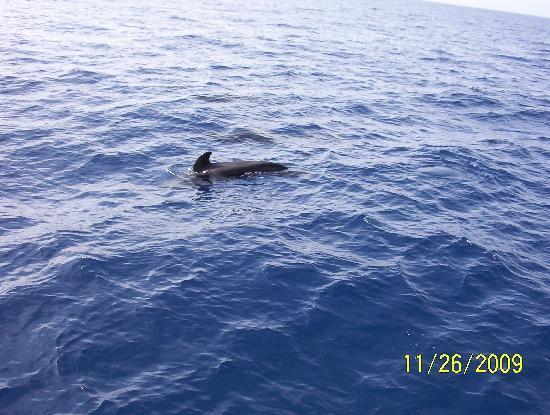 Aguamarina Golf Apartments: pilot whale