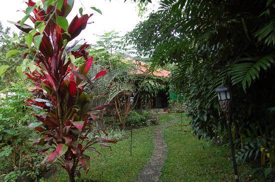 Boquete Garden Inn: garden leading to bar