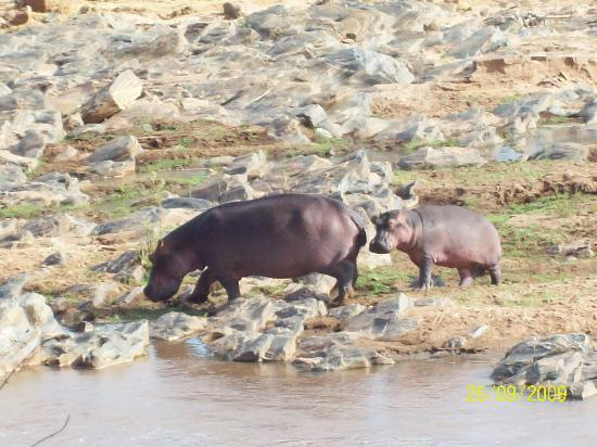 Kivulini Luxury Resort: Happy Hippo