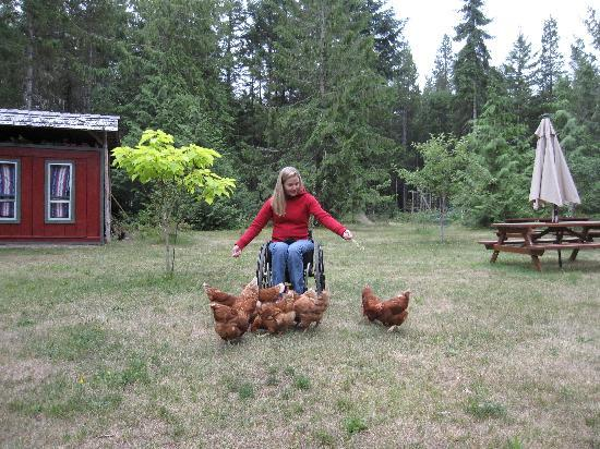 Cedar Song B&B and Cottage: Playing with the chickens