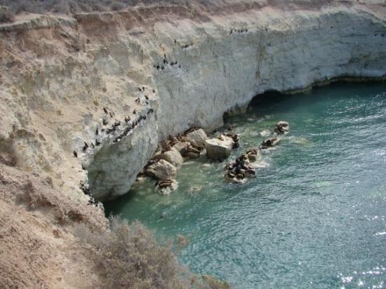Loberia de Punta Loma Image