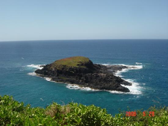 Kilauea Point National Wildlife Refuge: モンクシールもやってくるモクアエアエ島