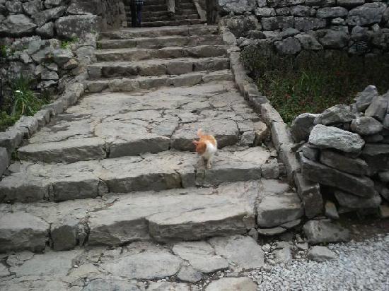 今帰仁ネコ - Foto di Nakijin Castle Remains, Nakijin-son - TripAdvisor