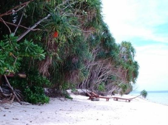 Kalimantan, Indonesia: lankayan Island.