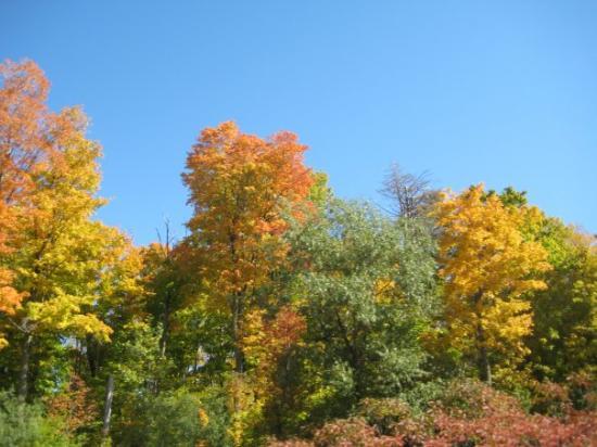 Zephyr, Kanada: The fall colours are so beautiful.