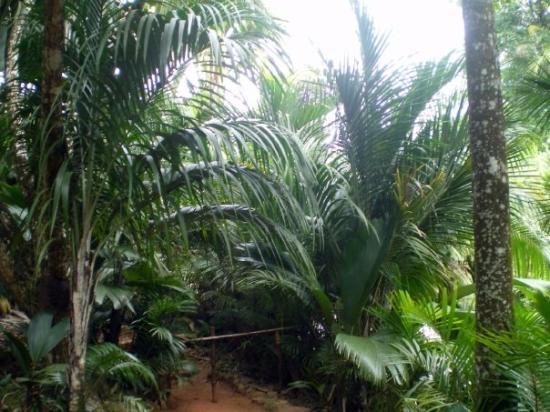 Vallee de Mai Nature Reserve: Vallée de mai