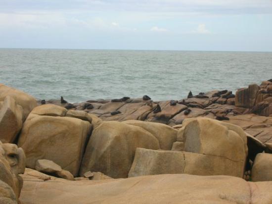 Rocha, Urugwaj: Los lobos del cabo