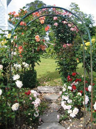 Oinako Bed and Breakfast: Romantic roses
