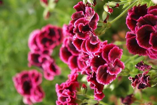 Casa Colibri eco-Lodge: Les fleurs