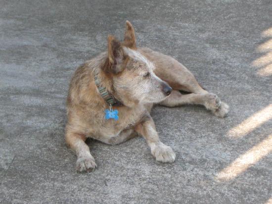 Aloha Guest House: Mango The Island Dog