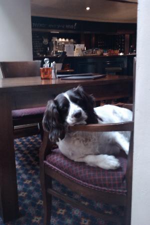 Coach & Horses: The pub dog!