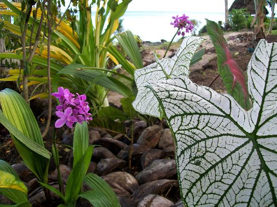 Paradise Taveuni: Just one of the hundreds of garden beds