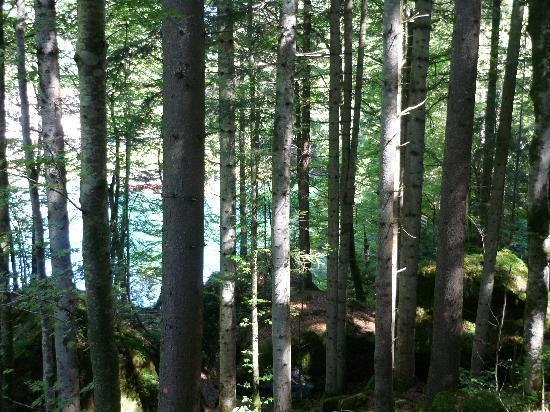 Blausee AG - Restaurants Hotel Forellenzucht: darüberliegender Wald