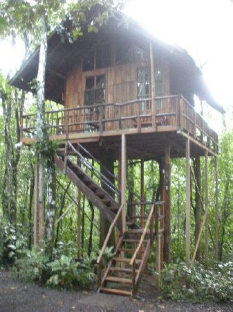 Tree Houses Hotel Costa Rica: Treehouse #2 looks nicer fromthe outside than #3