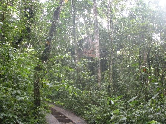 Tree Houses Hotel Costa Rica: #3