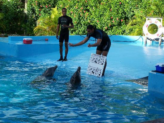 Manati Park Bavaro: A Picture of Singing Dolphins