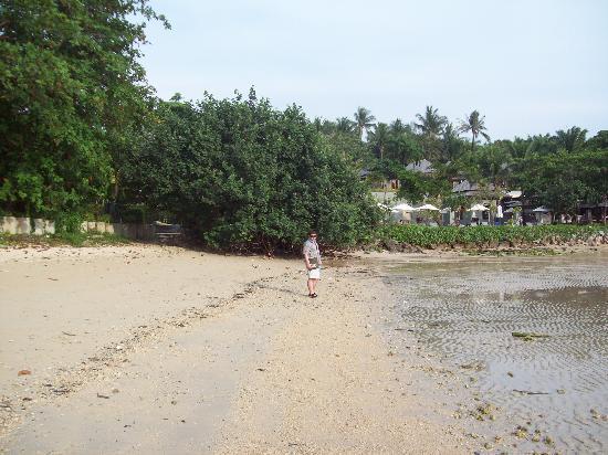 Klong Muang Inn : Opposite beach