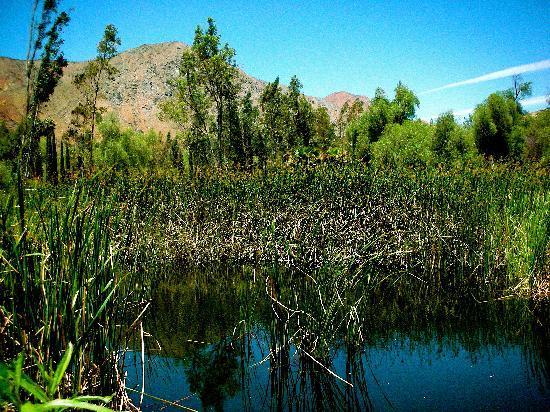 Rancho Agua Caliente: Beautiful hot spring pond