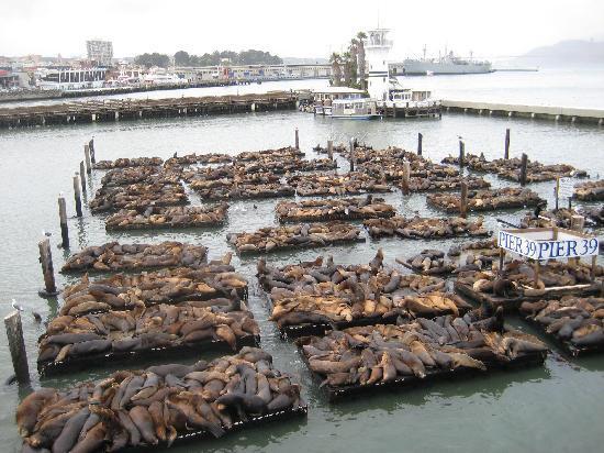Golden Gate Hotel: Harbour Seals