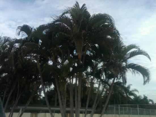 Bilde fra Dog Beach