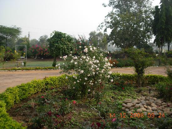 Hotel Rahil: The front garden