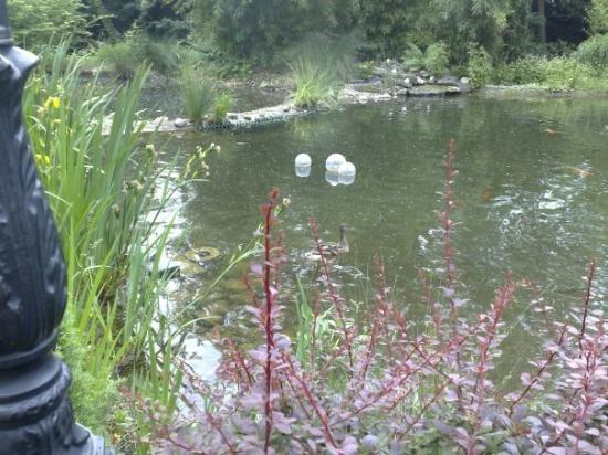"The Rilano Hotel Frankfurt Oberursel: The lovely pond out the back of the hotel, with ducks and huge ""gold fish""."