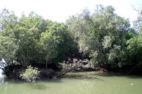 Sungei Buloh Wetland Reserve: Sungei Buloh Wetlands Reserve