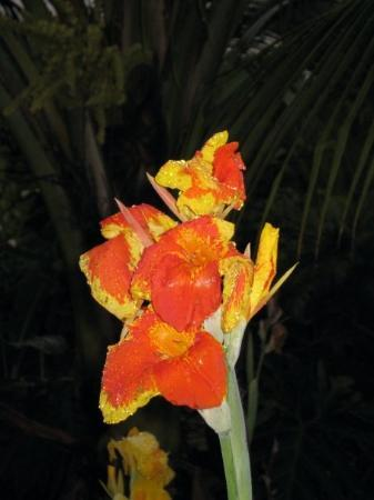 San Jose, Costa Rica: Flower