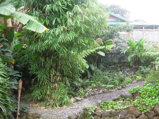 Hilo Bay Hale Bed & Breakfast: secluded back yard