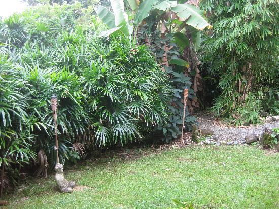 Hilo Bay Hale Bed & Breakfast: back yard