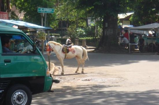 Pony ride is a form of transport - Picture of Bandung, West Java