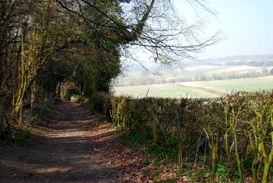 Shere, UK: Loads of beautiful walks in gorgeous scenery. Bring your camera!