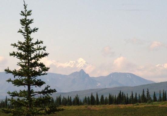 Hotels Near Mt Mckinley Alaska