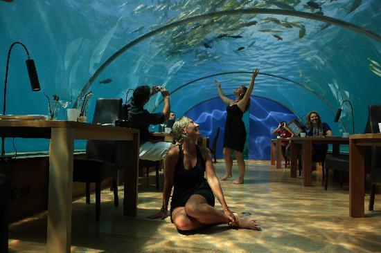 Underwater Rstaurant Picture Of Conrad Maldives Rangali Island