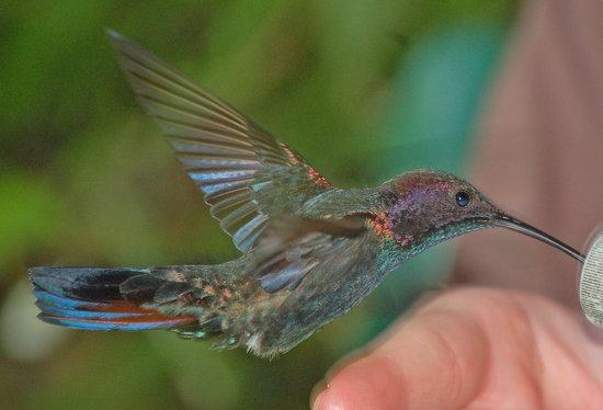 罗克兰兹鸟类保护区
