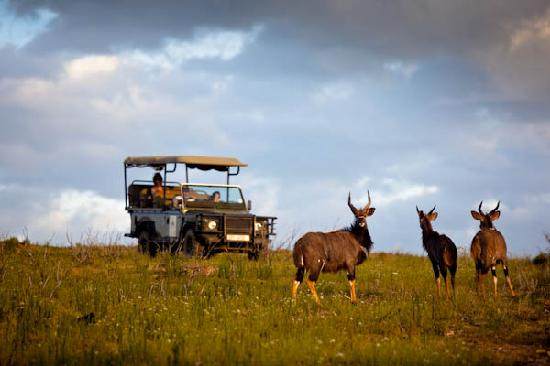 Swartberg Private Game Lodge: Abundant game, easily viewed from the open game drive vehicle