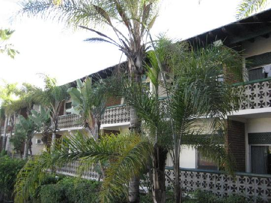 San Nicolas Hotel and Casino: some of the trees outside the balcony