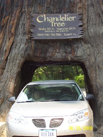 Redwood National Park : My car 2008