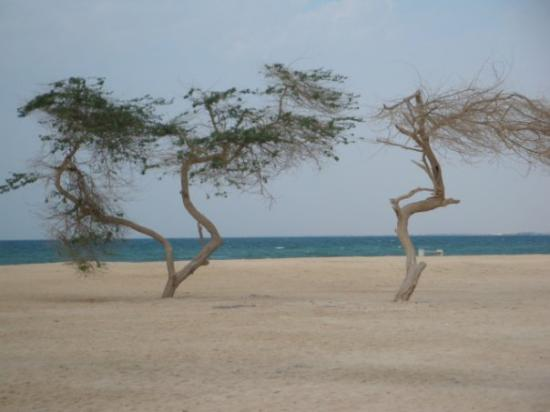Awali, บาห์เรน: Trees At Al Jazayir Beach. Bahrain