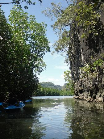 Langkawi, Malaysia: Mangroves
