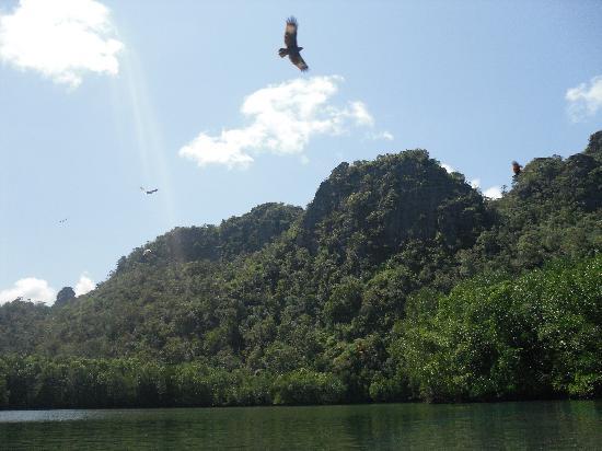 Langkawi, Malaysia: Eagles