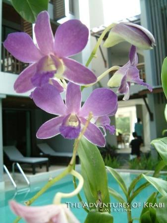 Aree Tara Resort: Orchids