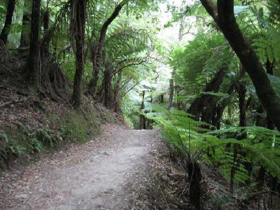 Anakiwa Lodge: Queen Charlotte Track - 2 mins walk